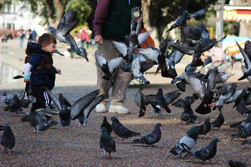 Child Playing, Pigeons, Plaza, Birds, Feed, Run, Play