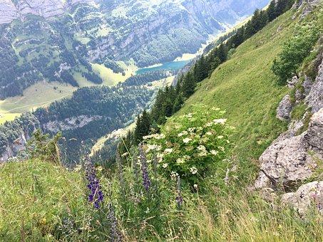 Flower, Nature, Summer, Plant, Sky, Field, Landscape