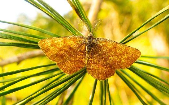 Poproch Pylinkowiak, Tom, Insect, Butterfly Night, Mols