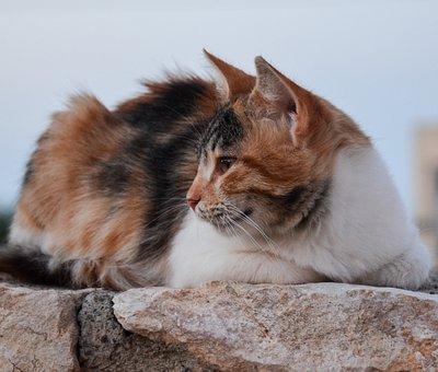 Cat, Animal World, Rest, Animal, Nature, Fur