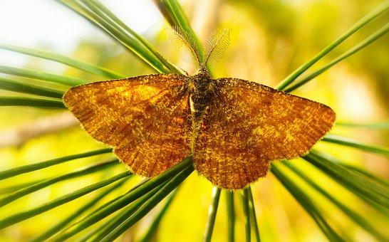Poproch Pylinkowiak, Tom, Butterfly Night, Mols, Insect