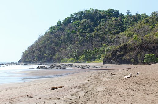 Costa Rica, Tropical, Jungle, Nature, Outdoors, Travel