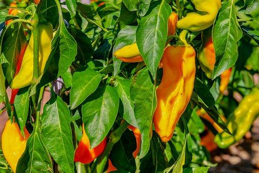 Vegetables, Paprika, Capsicum, Yellow, Mild, Spices