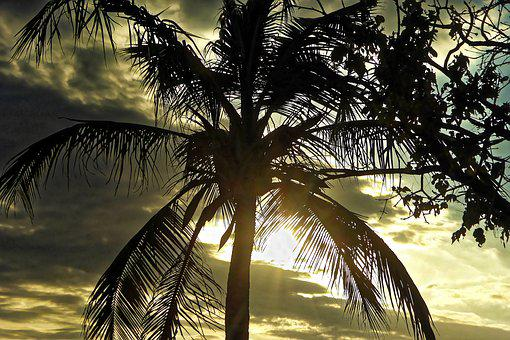 Palm, Sky, Clouds, Backlighting, Caribbean, Landscape
