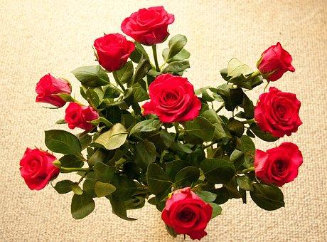 Bouquet, Roses, Red, Flowers, Romantic, Flora, Flower
