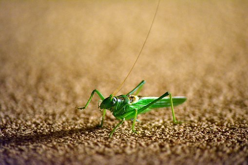 Grasshopper, Insect, Green, Jump, Wall, Nature