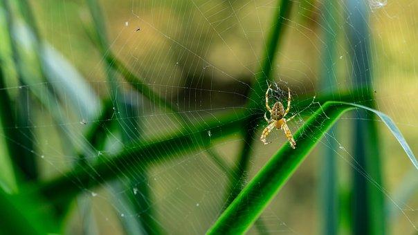 Spider, Hotel, Cobweb, Insect, Nature, Wallpaper
