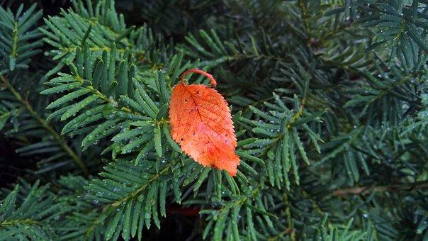 Leaf, Fall, Orange, Leaves, Autumn, Nature, Green, Tree