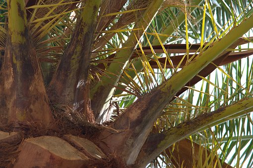 Palm, Leaf, Green, Plant, Tropical, Vacations, Nature