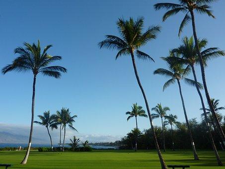Palm Trees, Maui, Hawaii