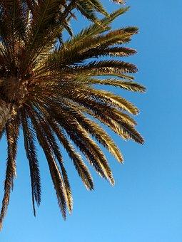 Palm, Leaf, Tropical