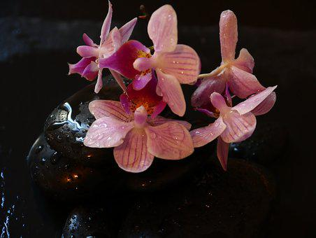 Orchid, Wellness, Stones, Relaxation, Recovery, Health