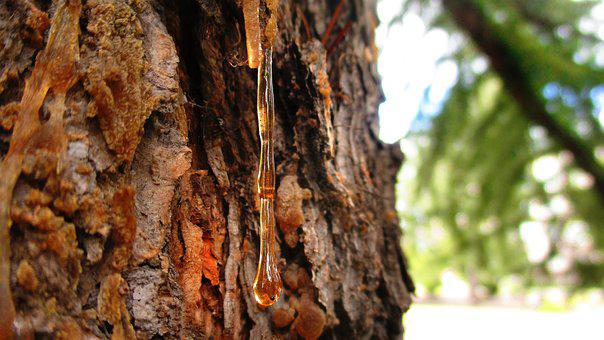 Resin, Drop, Pine, Tree, Spruce, Amber, Bark, Forest