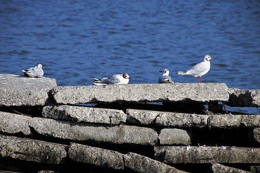 The Seagulls, Water, Masonry, The Stones, Stone, Lake