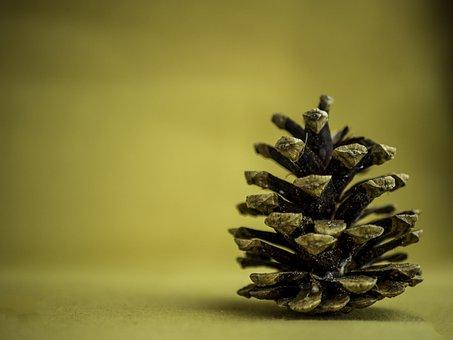 Pine Cone, Background, Yellow, Minimalistic