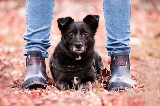 Autumn, Dog, Animal, Hybrid, Legs, Feet, Shoes, Woman