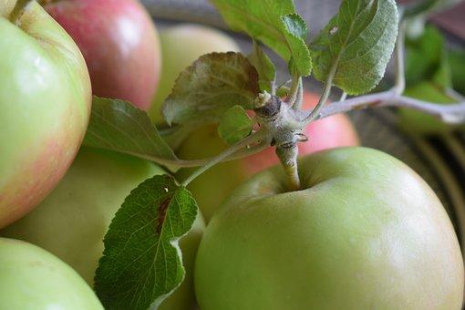 Apple, Apples, Fruit, Vitamins, Mature, Apple Tree