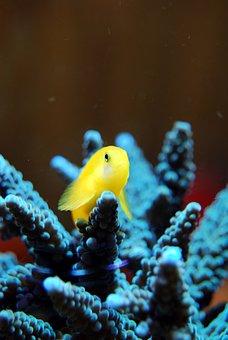 Coral, Reef, Sea, Nature, Wildlife, Ocean, Aquatic
