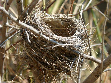 Nest, Branches, Architecture Animal, Ave, Nesting