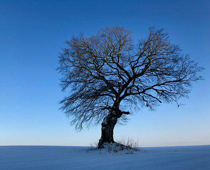 Tree, Winter, Snow, Landscape, Nature, Cold, Wintry