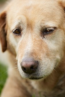 Dog, Cute, Nose, Animal, Friend, Fur Leather, Portrait