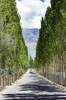 Tree, Avenue, Beauty, Road, Indus, Himalayan, Mountains