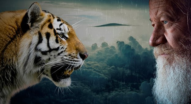 Tigers, Head, Animal, Human, Face, Old, Man, Grandpa