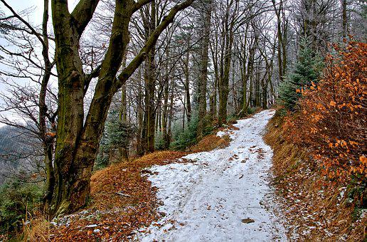 Beeches, Way, Forest, Foliage, Winter, Landscape