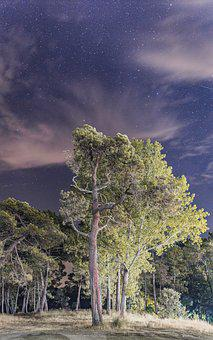 Night, Tree, Forest, Star, Sky, Clouds, Panoramic