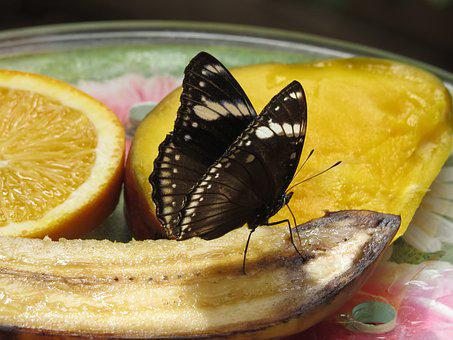 Butterfly, Nature, Park, Bug, Animals, Fauna, Exotic