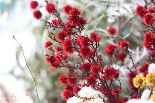 Flowers, Nature, Red, Gypsophila Elegans, Red Flower