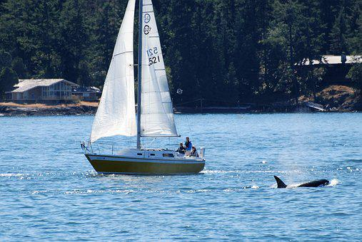 Sailing Boat, Encounter, Nature Observation