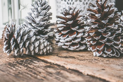 Pinecone, Snow, Creativity, Snowy