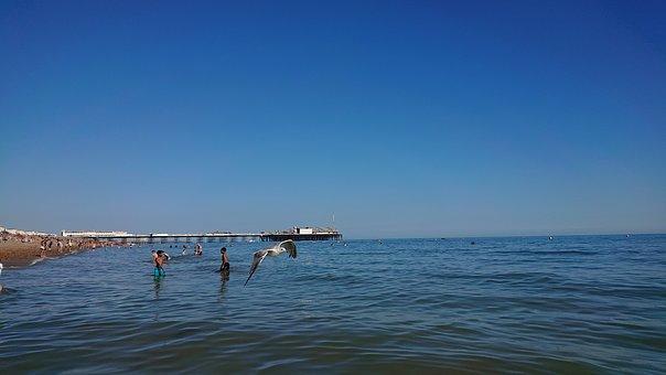 Seagull, Brighton, Bird, Seaside, Sea, Beach, Sussex