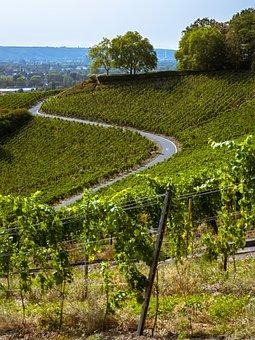 Away, Vineyard, Wine, Winegrowing, Trees
