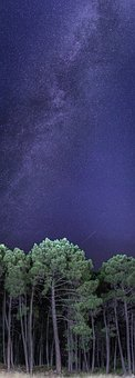 Night, Star, Via Lactea, Universe, Forest, Nature, Sky