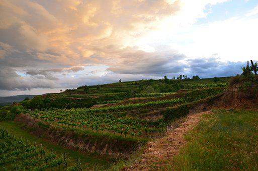 Vineyard, Abendstimmung, Sunset, Landscape, Atmospheric