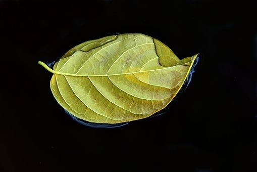 Leaf, Autumn, Water, Swim, Wet, Yellow, Alone