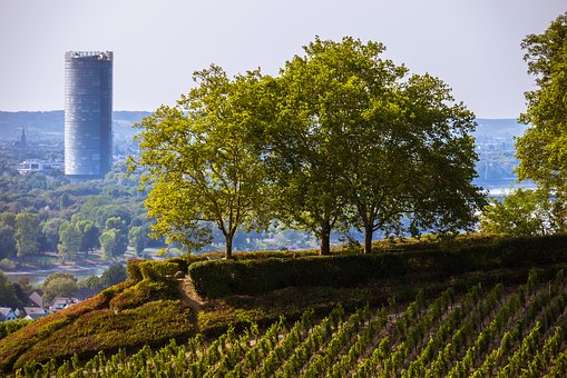 Grove Of Trees, Skyscraper, Vineyard, Wine, Winegrowing