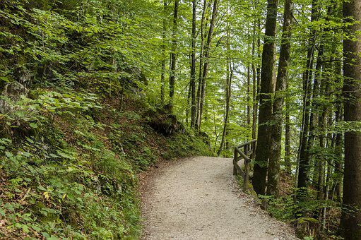 Forest, Autumn, Away, Nature, Path, Forest Path, Trees