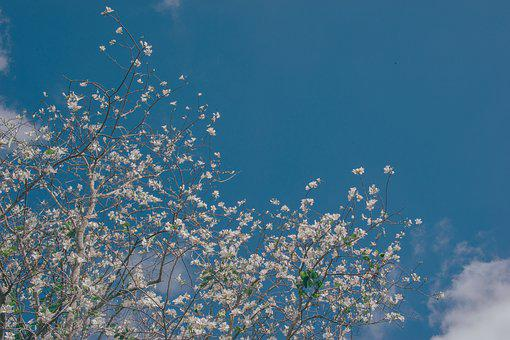 Sky, Flowers, Nature, Bloom, Summer, Blossom, Yellow