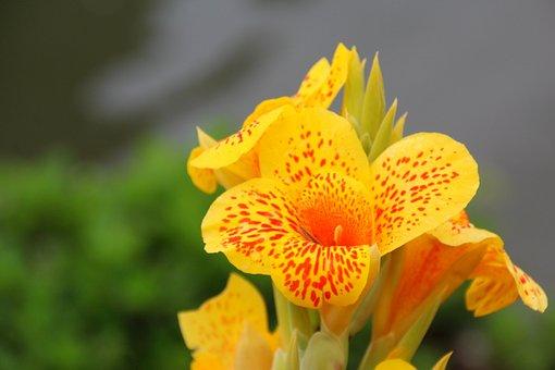 Flower, Orange, Blossom, Bloom, Cup