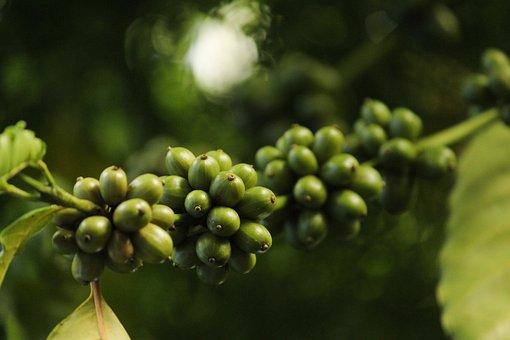 Coffee, Coffee Bean, Beans, Espresso, Cappuccino