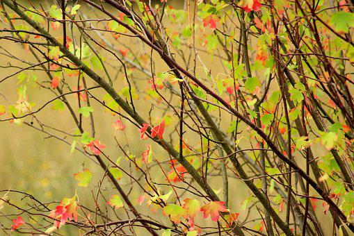 Bush, Summer, Twigs, Colorful Leaves, Nature, August