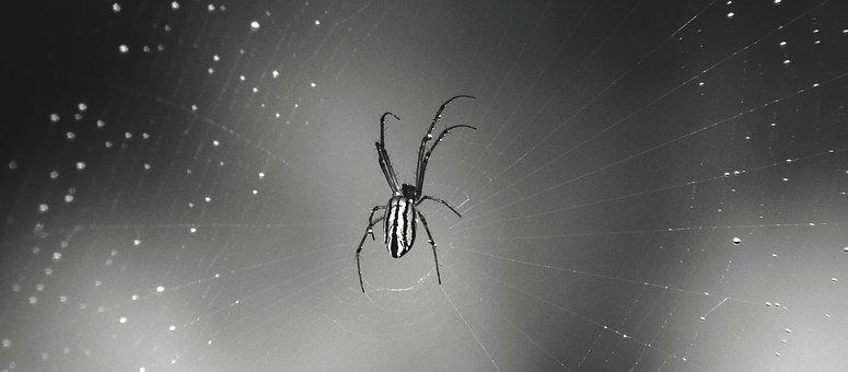 Macro, Black And White, Web, Arachnid, Guatica