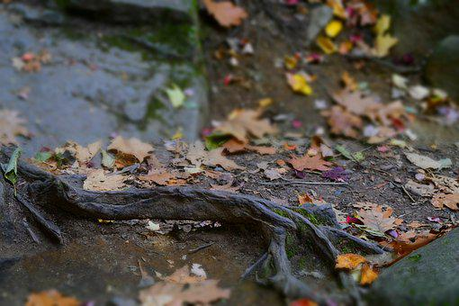 Smokey Mountains, Hiking, Fall, Trees, Landscape