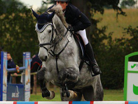 Horse, Ride, Equestrian, Mold, Show Jumping, Obstacle