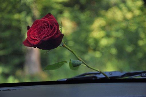 Red Rose Under Car Glass Wiper, Love, Romantic, Romance