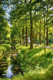 Park, Tree Lined Avenue, Water, Green, Nature