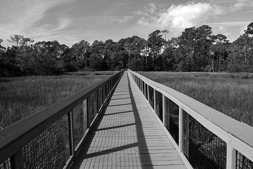 Boardwalk, Marshland, Wooden, Walkway, Florida Wetland